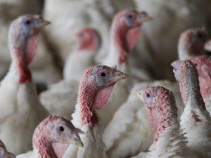 Spotlight on Thanksgiving (Part 2)